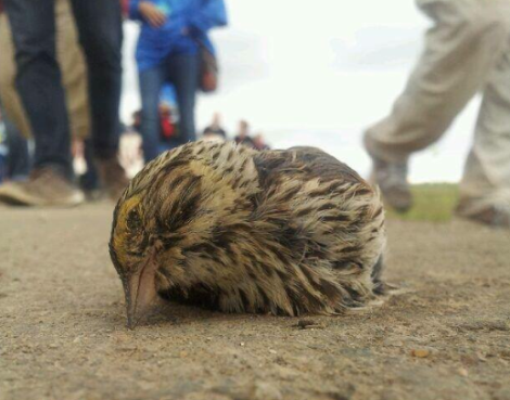 Photo of a dead bird from the 2013 Tar Sands Healing Walk. Credit: Unknown